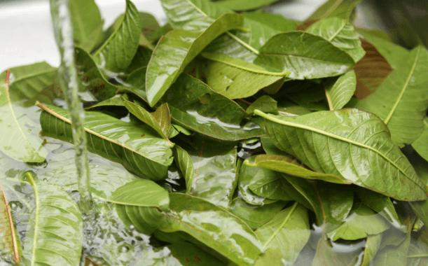 Guave – Natuurlijk Middel Tegen Haaruitval