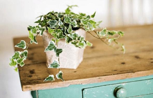 Bevorder De Kwaliteit Van Je Slaap Met Deze Planten